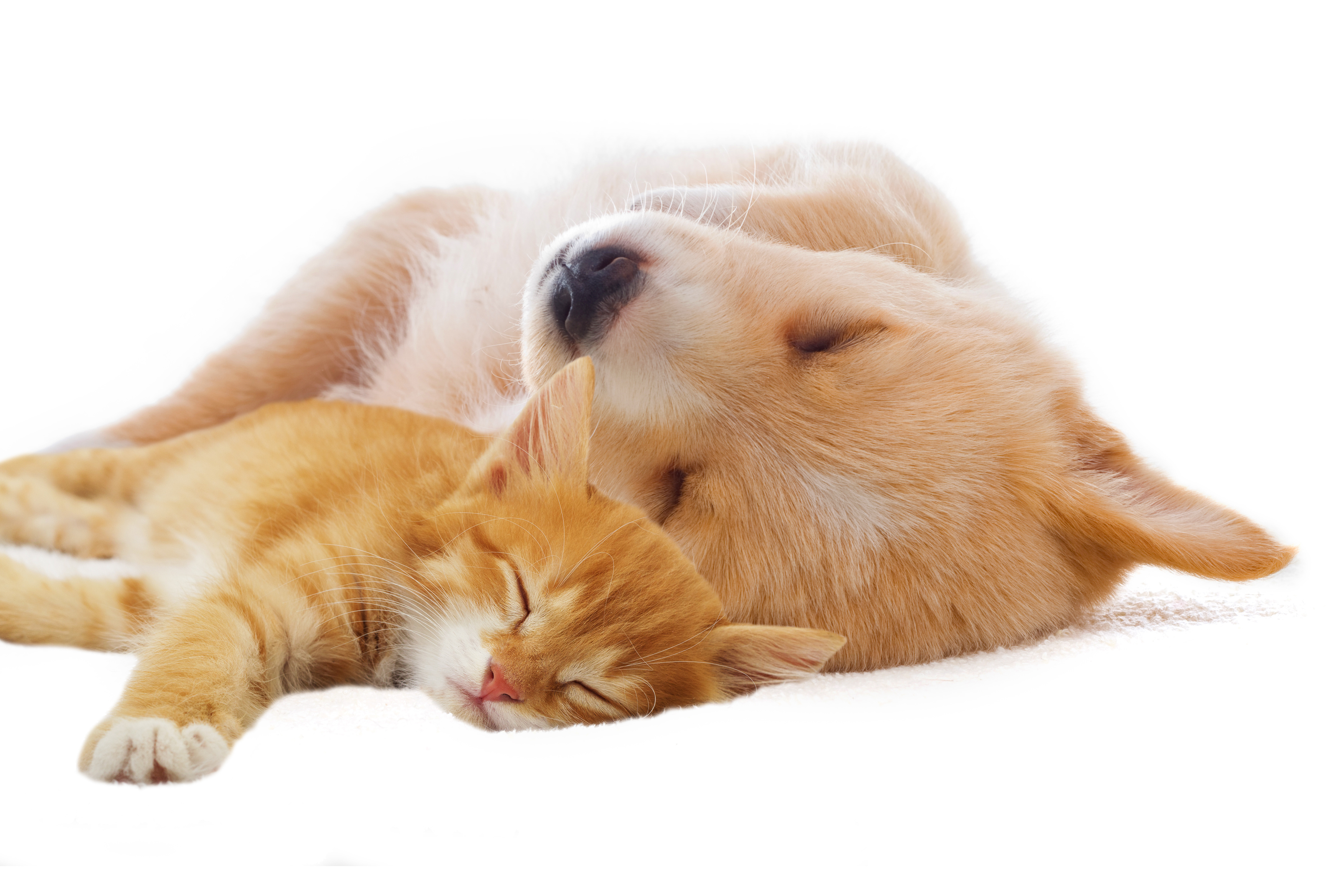 ADVANTAGES OF THE STERILIZATION OF DOGS AND CATS
