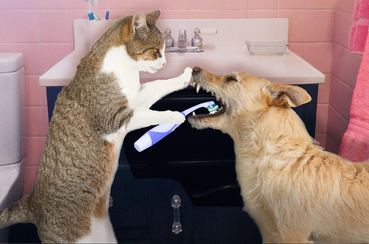 PERIODONTAL DISEASE IN DOGS AND CATS
