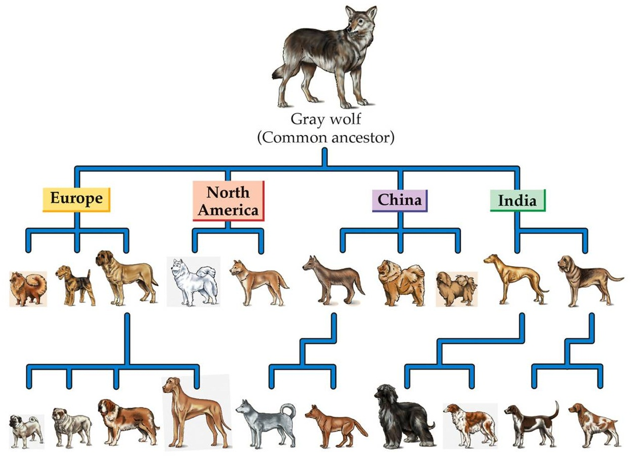What is the origin of the dog breeds?