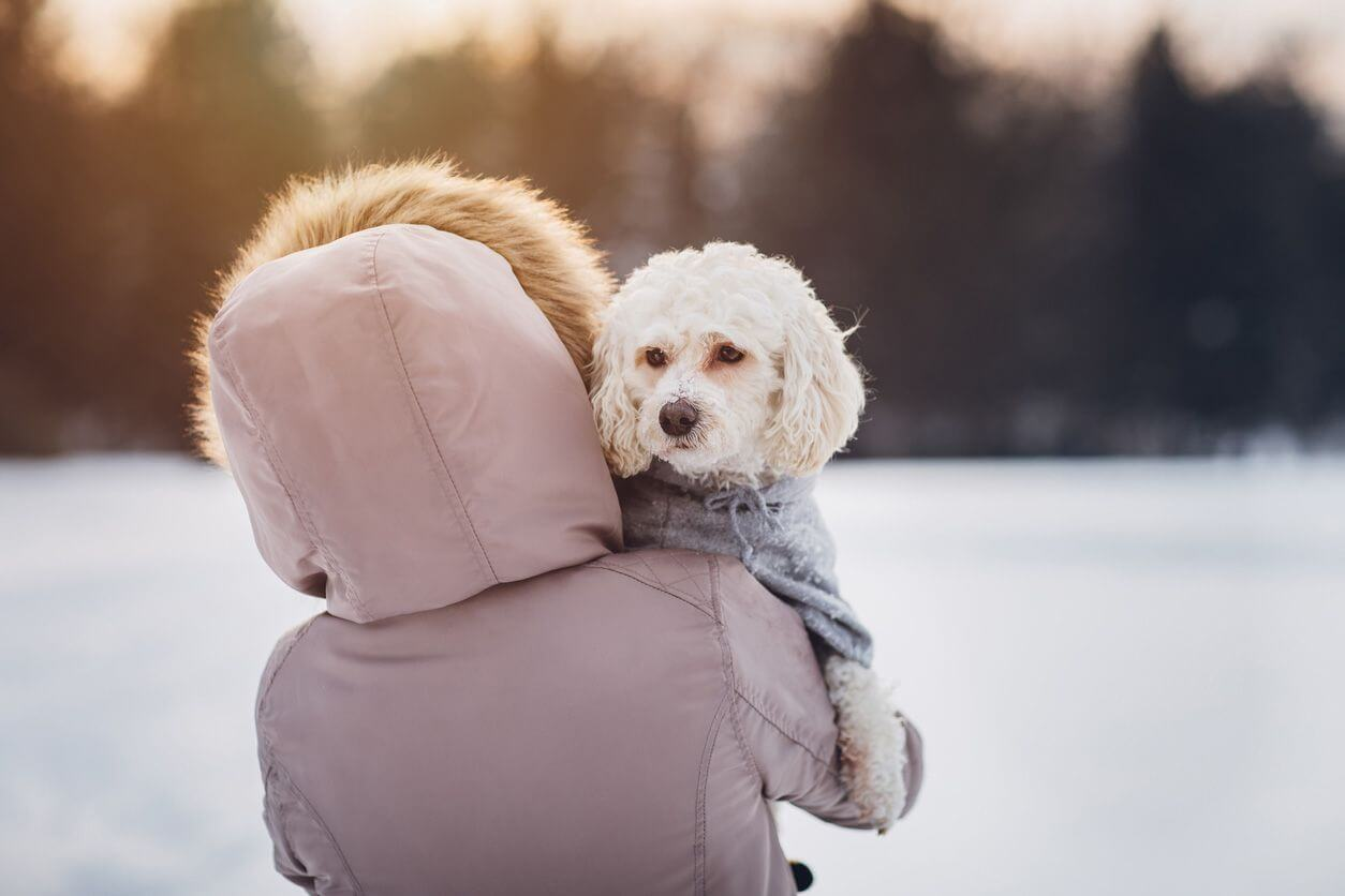 HOW TO PROTECT YOUR PET FROM THE COLD