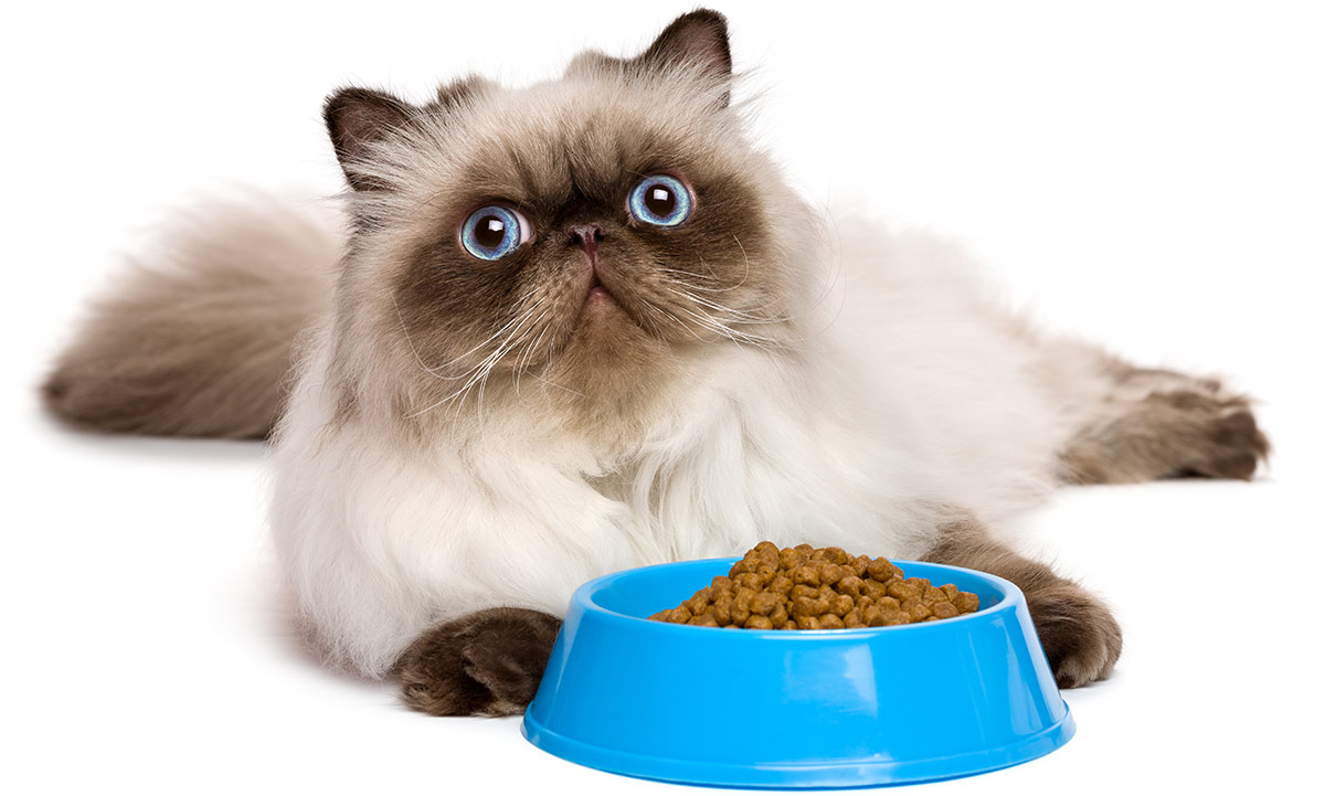 6 prohibited foods for cats. What you should not feed him
