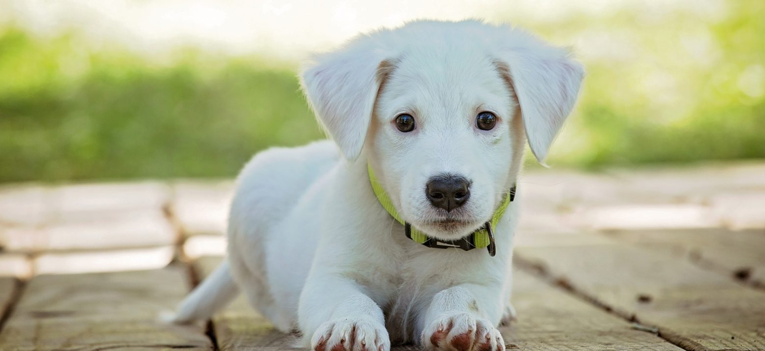 4 HYGIENE HABITS FOR YOUR DOG'S HEALTH