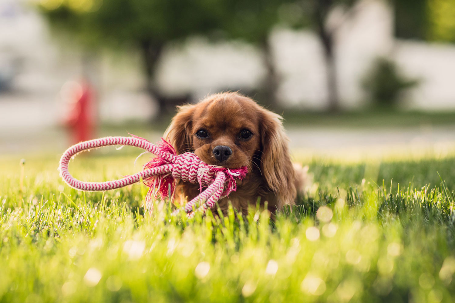 What can the owner do to motivate his dog when doing activities?